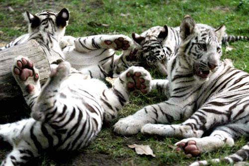 长隆动物园